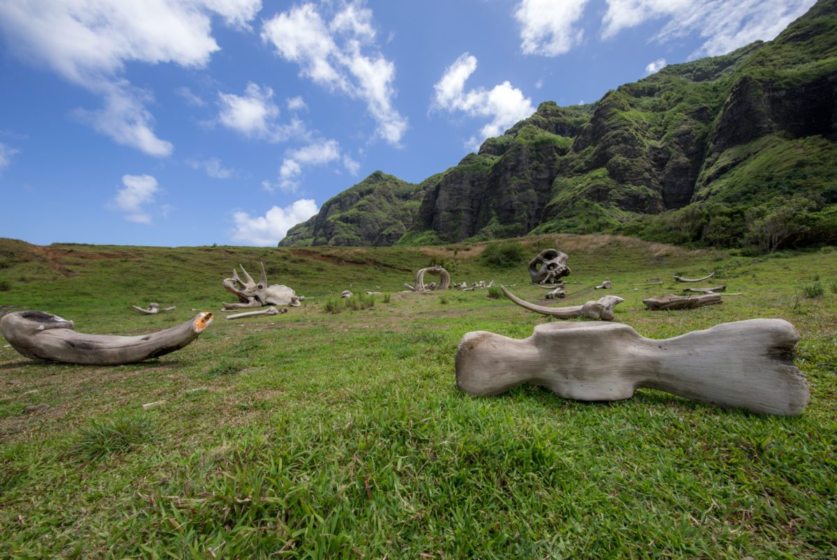 Kualoa Movie Tour Cover