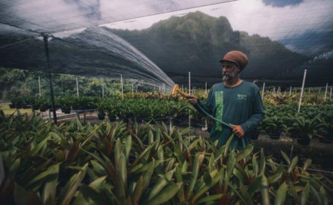 Man watering in farms