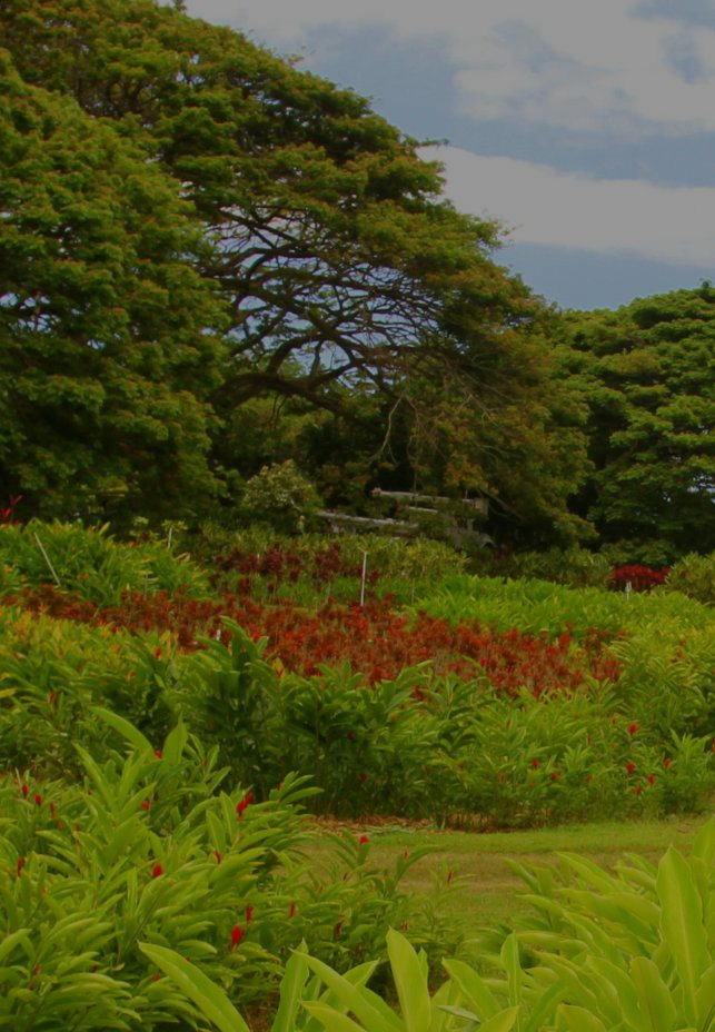 Kualoa Flower Farm & Gardens